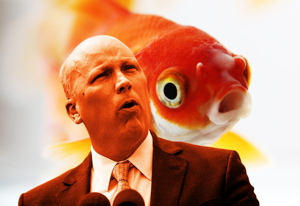 Chip Roy Is A Cowardly Goldfish